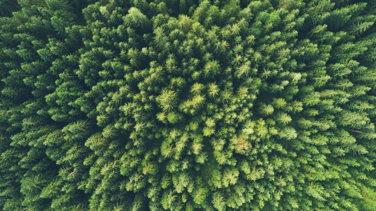 Die grüne Kommunikation